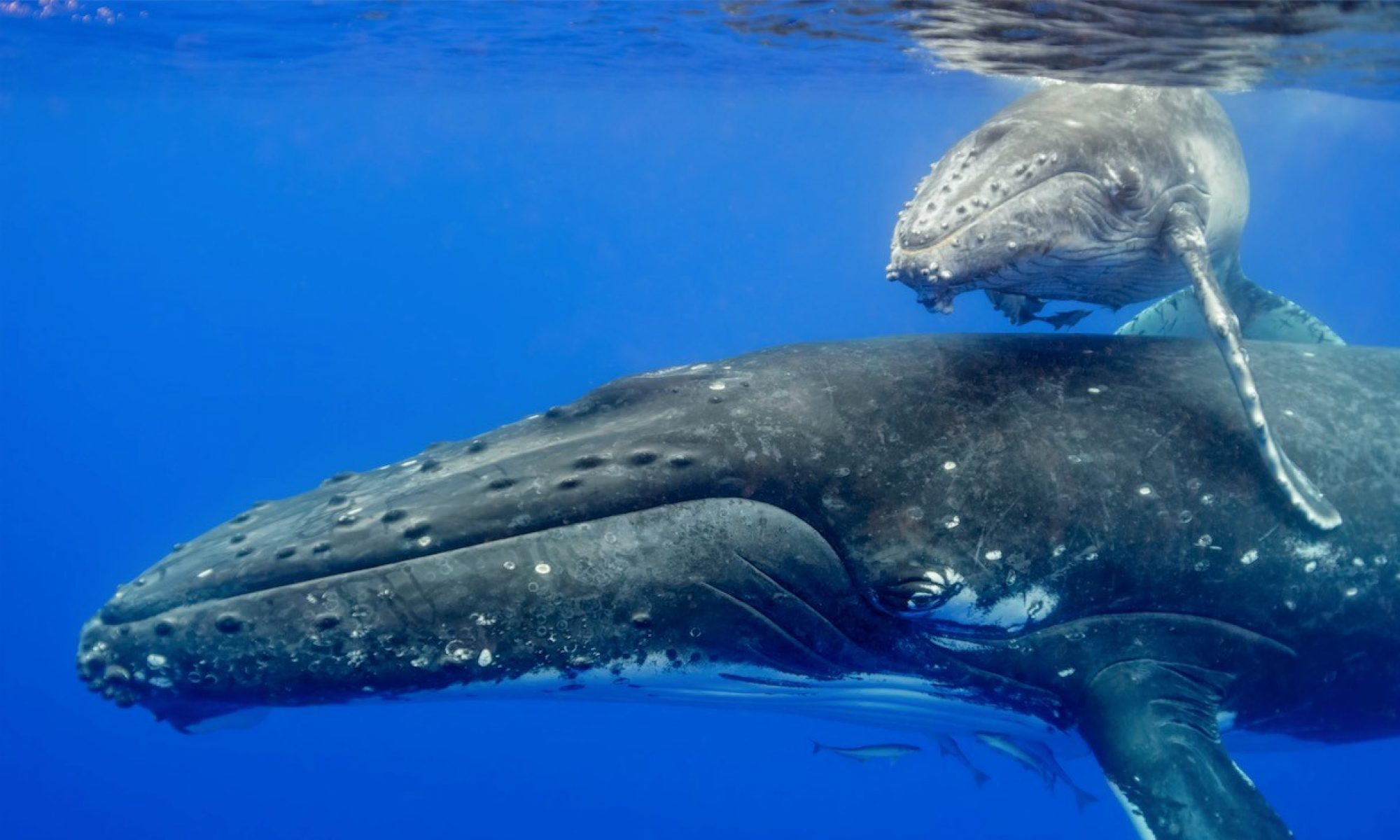 DOLPHIN + WHALE EXPEDITIONS